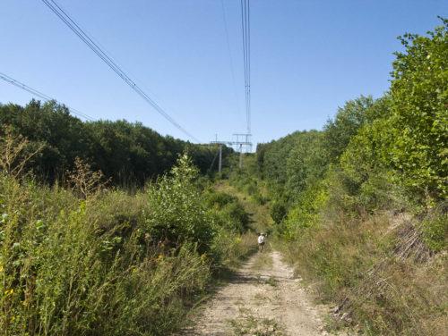 Дорога через Усольско-Березовский массив