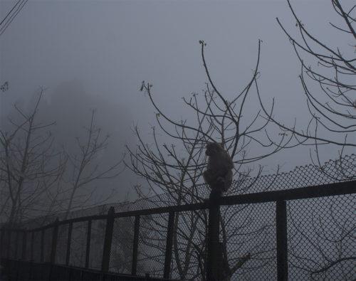 Обезьяна в тумане