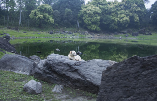 Медитирующая собака