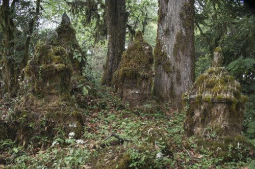 Древние чортены в джунглях за монастырём
