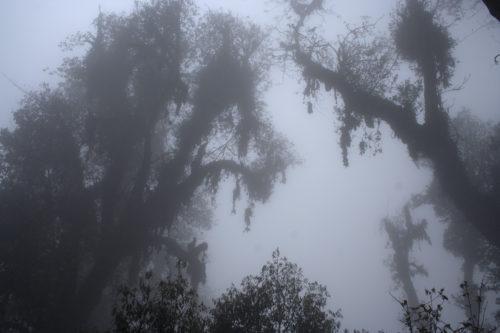 Фантастические деревья