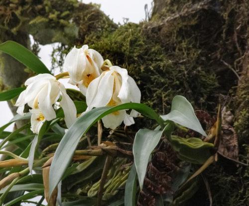 Дикие орхидеи - 5