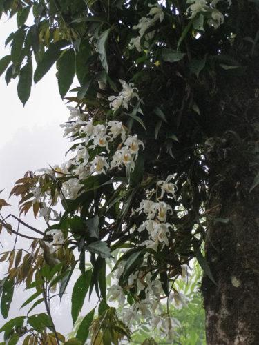 Дикие орхидеи - 4