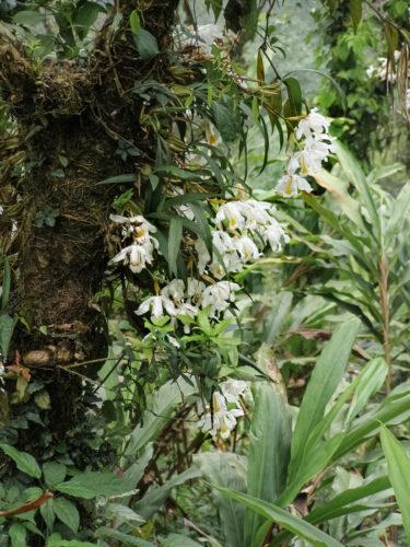 Дикие орхидеи - 3