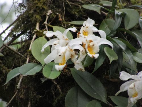 Дикие орхидеи - 6