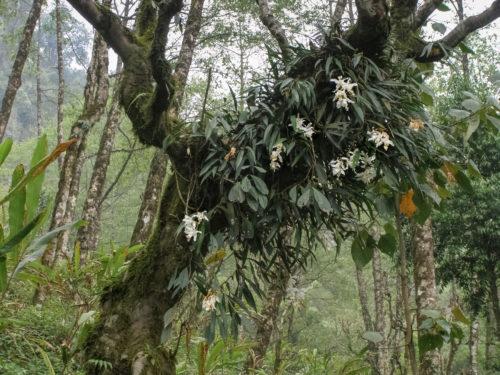 Дикие орхидеи - 1
