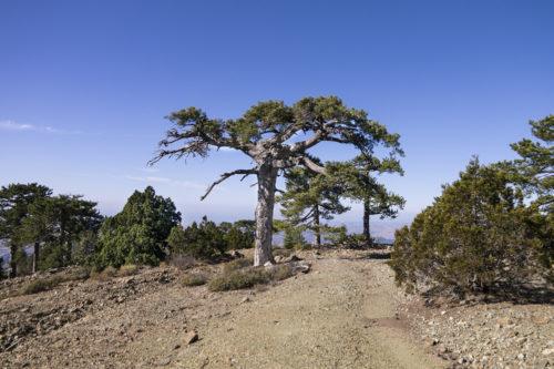 Живописные деревья на тропе