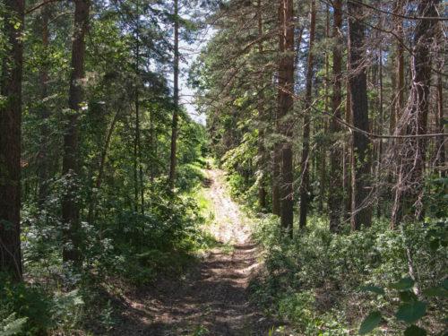 На лесных тропинках