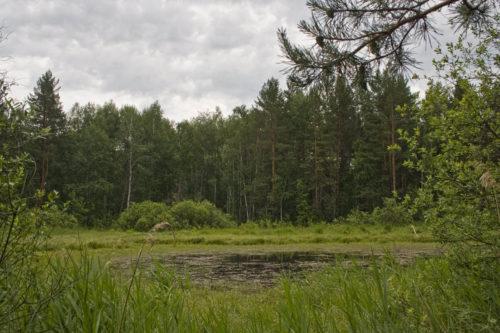 Озеро в сказочном лесу