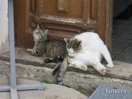 Монастырские коты