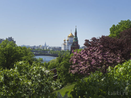 Вид на храм Христа Спасителя с кремлевского холма