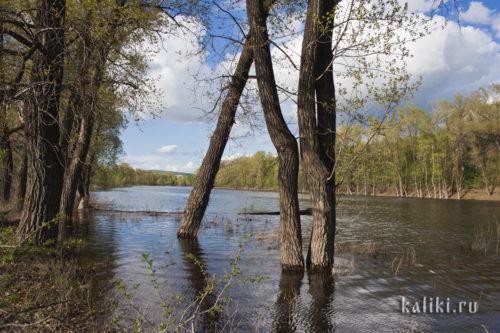 Весенне половодье на Каменном озере в окрестностях с. Подгоры