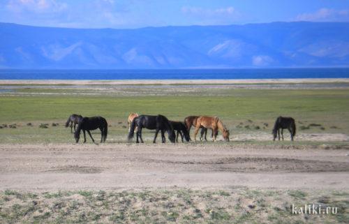 озеро Байкал, остров Ольхон, лошади