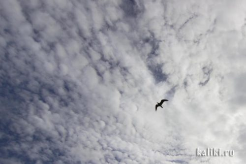 небо, облака, полет птицы
