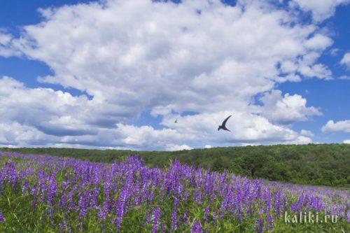 Полет стрижей над цветущей долиной в Жигулевских горах