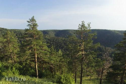 Сосновый лес в Жигулевском заповеднике