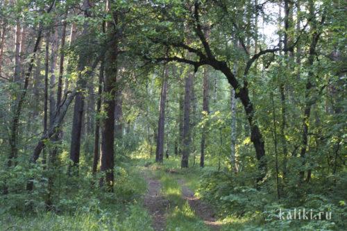 Чурокайский лес